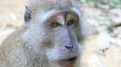 Stock Video Footage of 4k monkeys wildlife free animals outdoors care primate ape close up face
