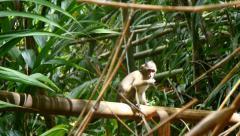 4k baby monkey jungle wildlife free animals outdoors care primate ape - stock footage