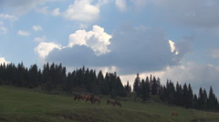 Wild Horses Group Feed Alpine View Mountain Grassland Landscape Wild Animals - stock footage