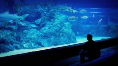 Man Watching Fish Through Glass In Aquarium Stock Footage