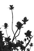Black Plants Nature Background - stock illustration