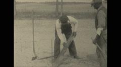 Vintage 16mm film, 1936, Florida, planting tung tree, plantation Stock Footage
