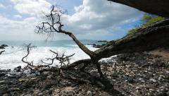 Glide cam shot along rustic tree on rocky beach by ocean in Maui, Hawaii (HI) Stock Footage