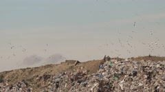 Flock of gulls over landfill garbage dump - stock footage