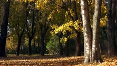 Autumn park with sun beam Stock Footage