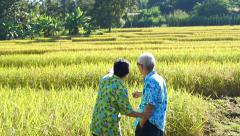 Asian senior couple walking and looking along rice field Stock Footage