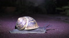 A snail walks at night, thus avoiding predators and heat. With an ant Stock Footage