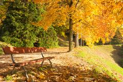 Autumn scene with trees and leaves of beautiful colors Stock Photos