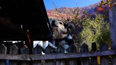 Mountain scenery, barking dog Stock Footage