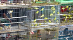 Dozens of Caged Finches in a Pet Store Stock Footage