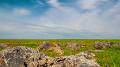 4K Timelapse. Rocky terrain with green grass and red tulips in the steppes Stock Footage
