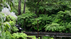 Puffing Billy steam train - stock footage