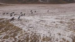 Stock Video Footage of Aerial - Beautiful horses running in the mountain valley in autumn 4K