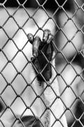 Black and white of Monkey hand touching a cage, lack of independence. - stock photo
