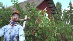Handmade scarecrow in cheery tree near rural house. 4K Stock Footage