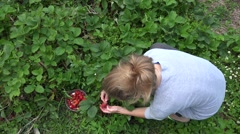 Peasant woman girl harvest ripe strawberries in farm plantation. 4K Stock Footage