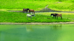 Wilde horses by the mountain lake Stock Footage