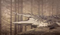 The Crocodile,coldblooded wild  animals Stock Photos