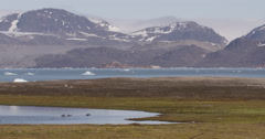 Wide Scenic of Bay and Goslings Near Glaciers in Arctic Ocean Stock Footage