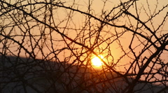 Sunset blur footage with shifting focus through trees in Africa Stock Footage
