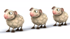 Funny sheep Stock Footage