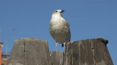 White and grey seagull relaxing on mooring posts in Venice Stock Footage