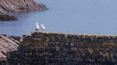 Sea gulls perched on old stone pear sunny day Stock Footage