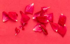 Red rose petals on a red background Stock Photos