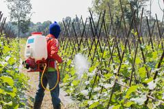 spraying pesticide - stock photo