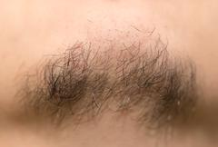 Seven Day Old Beard. Seven day old beard on a Caucasian male. Macro close up. - stock photo