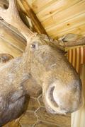 Elk. Stuffed animal Stock Photos