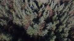 Aerial of Coniferous Forest - Northern Canada Stock Footage