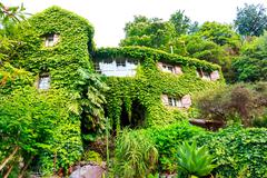 House overgrown with ivy - stock photo