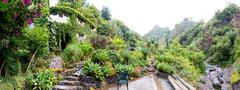 Tropical botanic garden against mountains, Portugal, Madeira Stock Photos