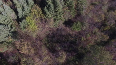 Aerial of northern canadian forest Stock Footage