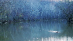 Blue Misty Morning Woods Green River Stock Footage