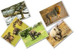 African animals collage - stock photo