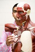 Student using anatomical model - stock photo