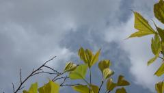 Fly away from tree yellow foliage to cloudy sky. Vertical panoramic & zoom in 1 Stock Footage