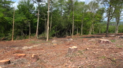 Pan across a deforested area with stumps and cut trees. Stock Footage