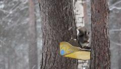 The yellow squirrel feeders Stock Footage