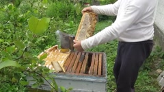 Extract cells with honey from the hive Stock Footage