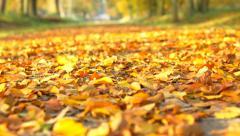 Autumn leafs on the ground Stock Footage