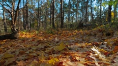 Yellow Foliage On The Ground In Autumn Park Stock Footage