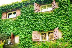 Stock Photo of House overgrown with ivy