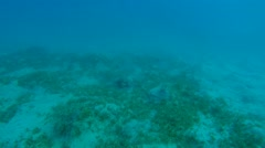 sea turtle will move to fin - stock footage