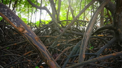 Close up view of roots, branches of trees in mangrove forest in Southeast Asia Stock Footage
