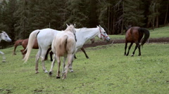 Stock Video Footage of Horses running in the mountains