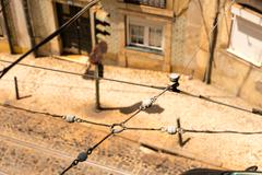 Tram cables - stock photo