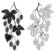 Two contour branches hop - stock illustration
